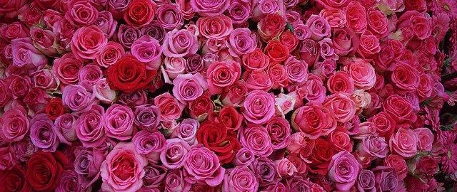 chandigarh rose gardens