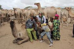 Camel Market (60)