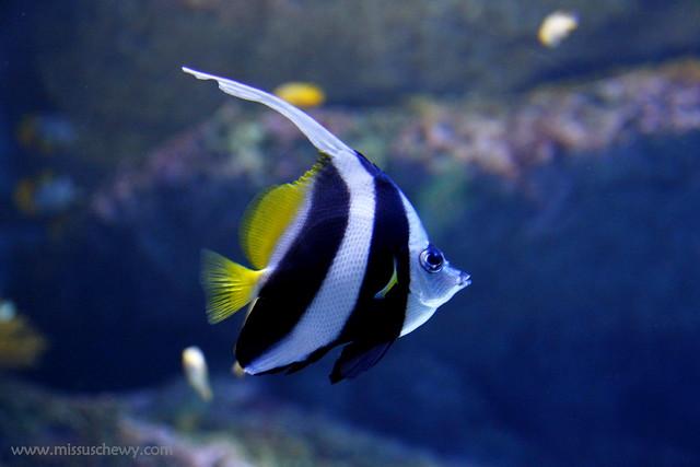 RWS S.E.A Aquarium 444