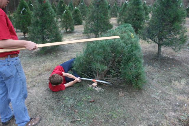 ChristmasTreeShopping2012 - 15