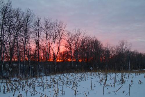 Sunset in Spruce
