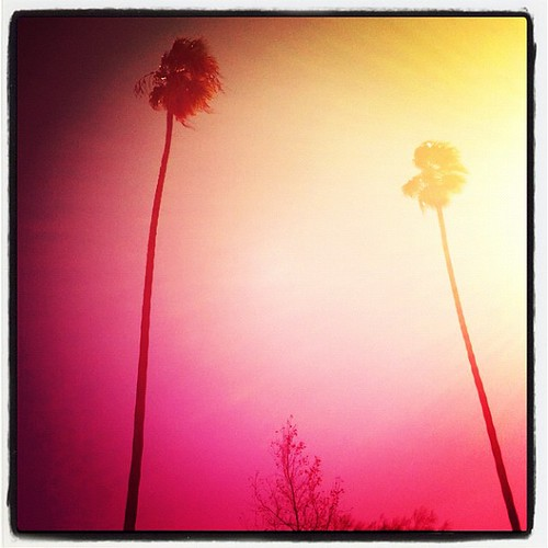 pink sunset jj windy palmtree iphone joshjohnson skyporn vdh iphone4 thisiscalifornia iphonephotography iphoneography igers iphoneonly instagram statigram jjforum instadaily jjchallenge instagramhub instagood uploaded:by=flickstagram jamesfavourites instagram:photo=44254992023031