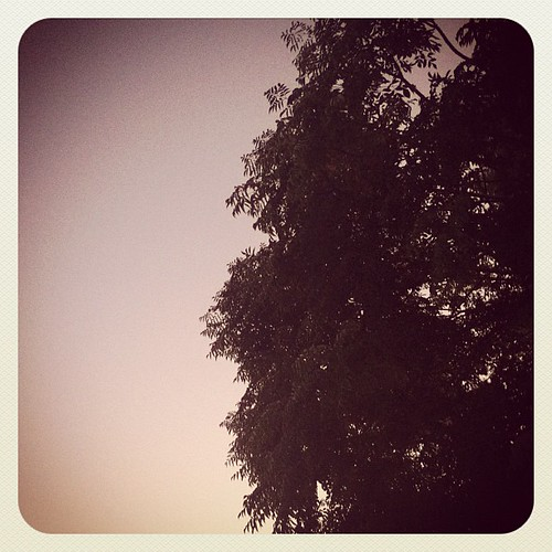 california sunset sky tree jj october dusk iphone joshjohnson vdh iphone4 thisiscalifornia iphonephotography iphoneography igers iphoneonly instagram statigram jjforum instadaily jjchallenge instagramhub instagood uploaded:by=flickstagram instagram:photo=27572306123031 jamesfavourites
