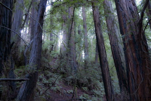 Muir Woods by The Shutterbug Eye™