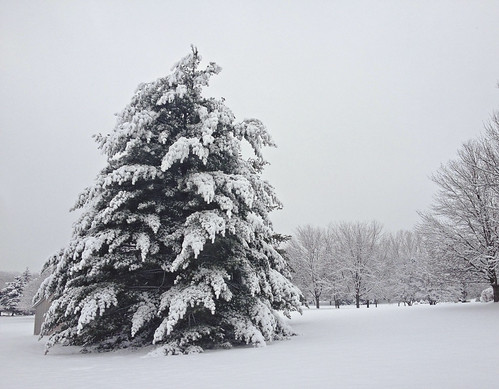 perfect snow tree