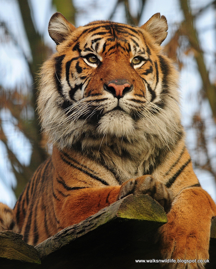 Chester Zoo 31.12.12 1266