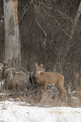 Deer_44230.jpg by Mully410 * Images