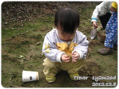 121208-撿到一顆小泥石,正在研究怎麼吃