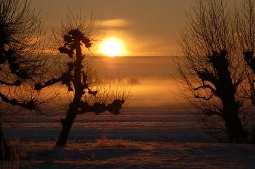 winter light sky sun tree bomen nederland zon paddestoel