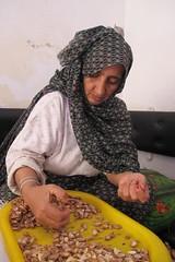 Mulher a escolher e partir as sementes de argan em Marrocos