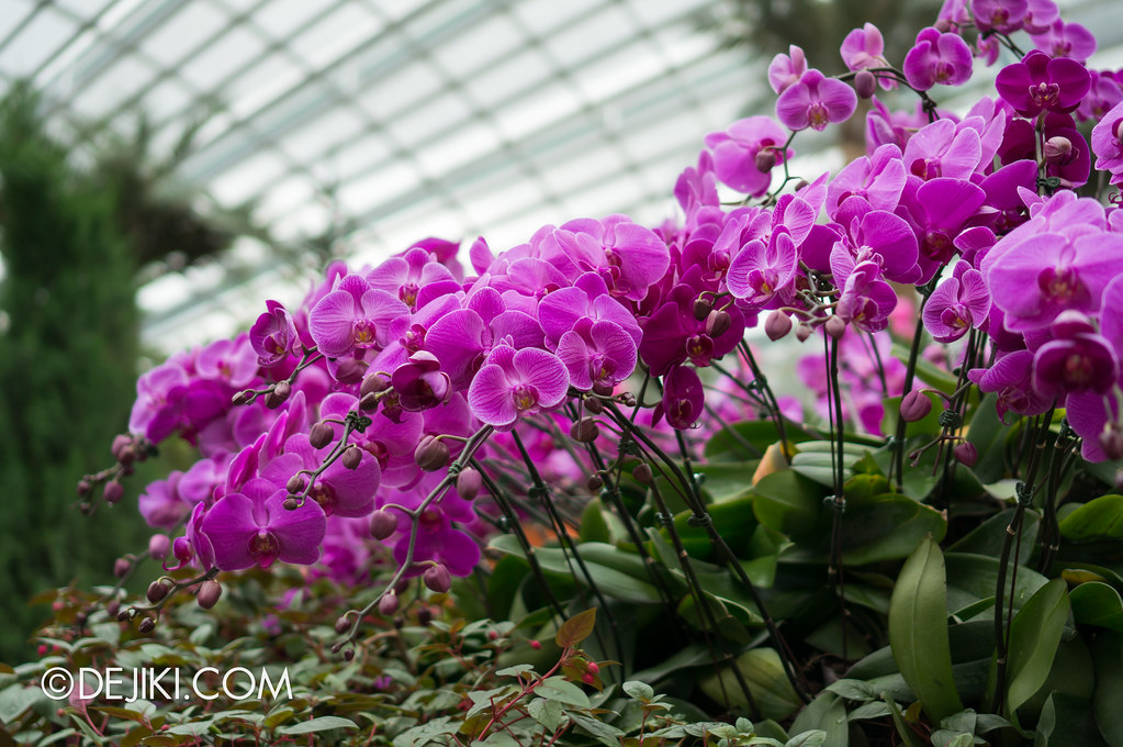 Gardens by the Bay - Orchids