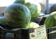 Maplewood Farmers Market - Essex County NJ (17)