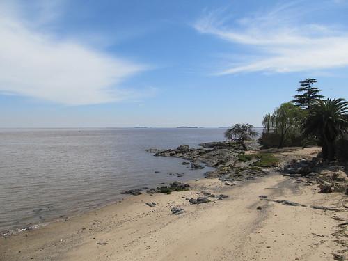 Colonia del Sacramento: un palmier, un pin, une petite plage, rien de plus normal en bord d'estuaire ;)