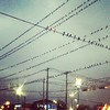 Every bird in Brownsville! #birds #weird #cool #nature #iphone #brownsville #instagram #picoftheday #pictureoftheday