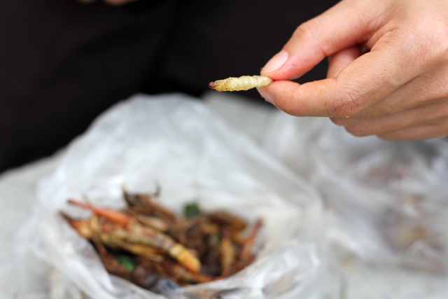 Eating Bamboo Worms