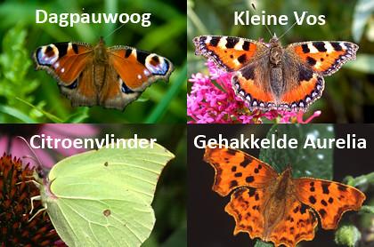 vlinders_420
