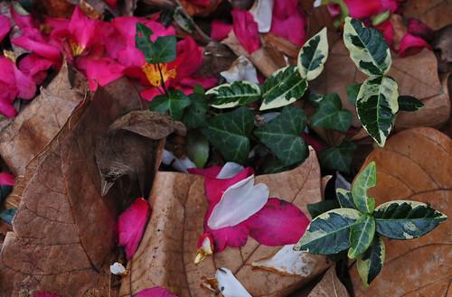 Shattered Petals (2)