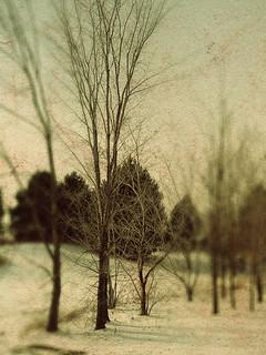 dec trees2