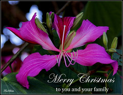 joy to you..