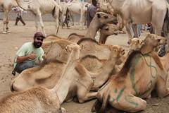 Camel Market (49)