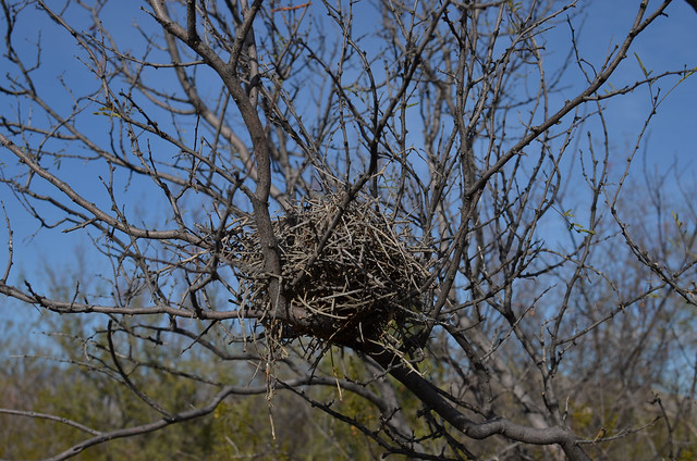 Bird's Nest definition/meaning