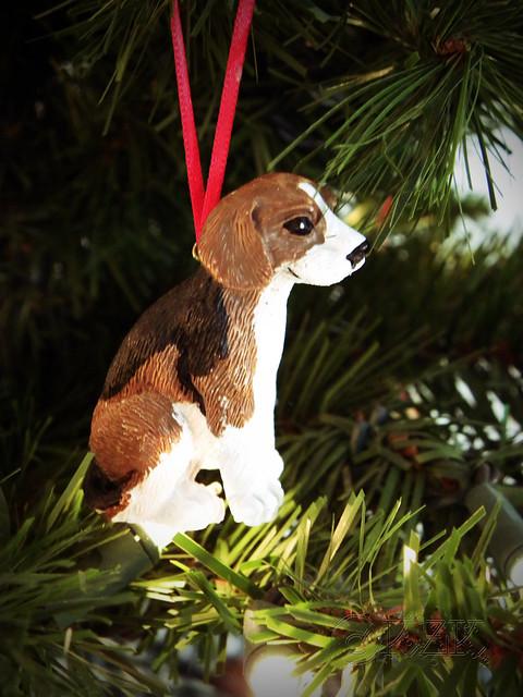 DSCN4702e Beagle