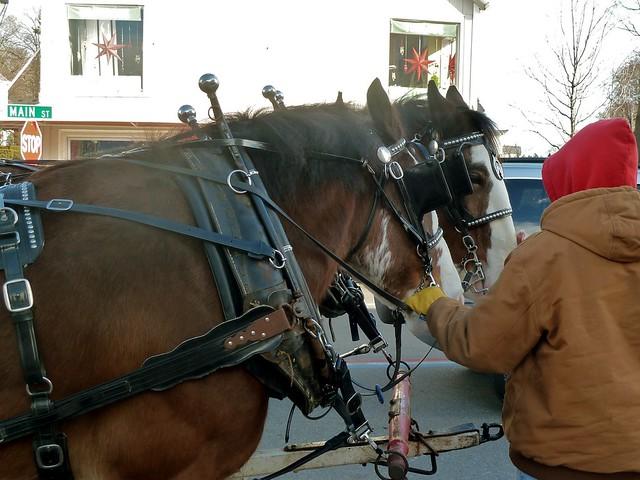 horses on main