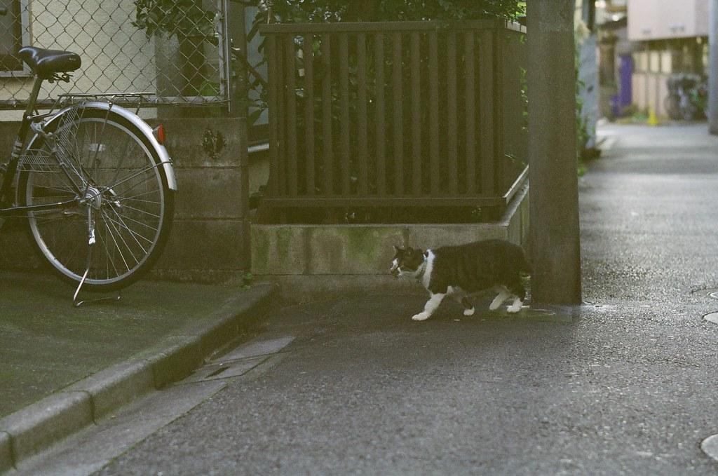 雨上がりの猫