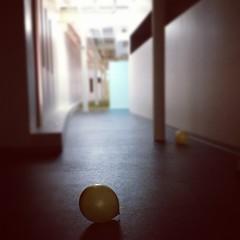 Balloon - #deflated #instagram #emptyhalls
