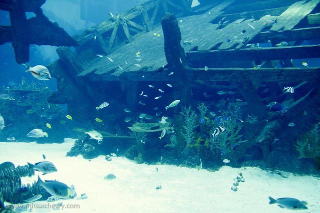 RWS S.E.A Aquarium 404
