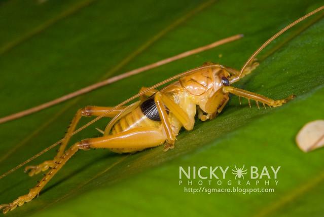 Cricket - DSC_7639