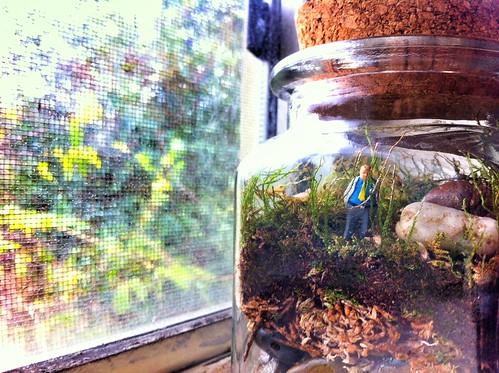 Gerald in a Terrarium