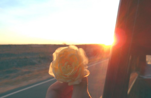Sunset and rose!!