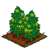Farmville_Freak_super_hops_grown