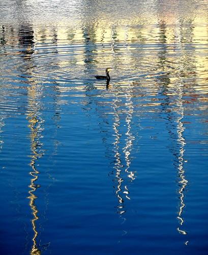 italy reflection bird water reflections italia harbour liguria porto riflessi uccello riflesso savona cormorano