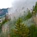Nature's Mist - Bavaria