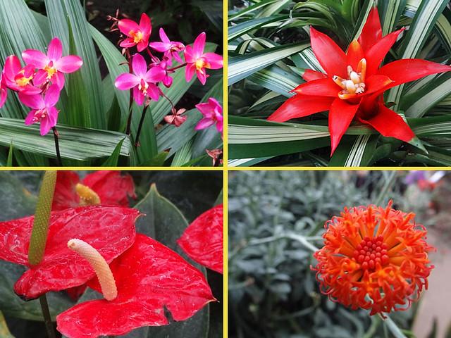 conservatory-flowers2