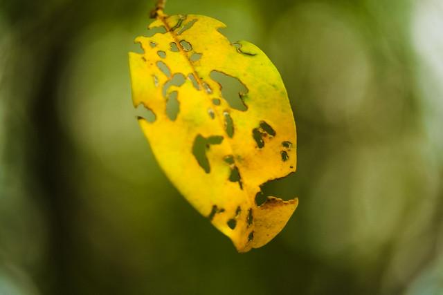 14.365 {Yellow}