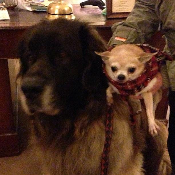 Dog Friendly Devon
