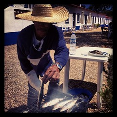 Great fresh sardines
