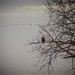 Eagle Sighting by Flipped Out