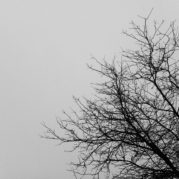 Day 3 of the #5shotchallenge #blackandwhite It was super foggy today. Took this while waiting at karate.