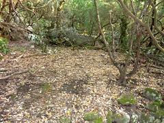 Ancienne bergerie de San Martinu : une aire de carbonara (charbonnière) proche de la bergerie
