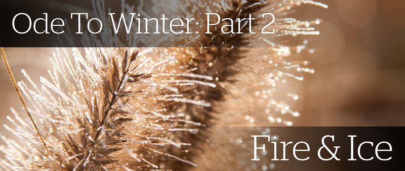 Winter Interest 2 -Fire &  copy