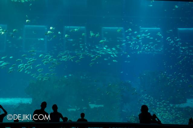 S.E.A. Aquarium - Open Ocean revisited