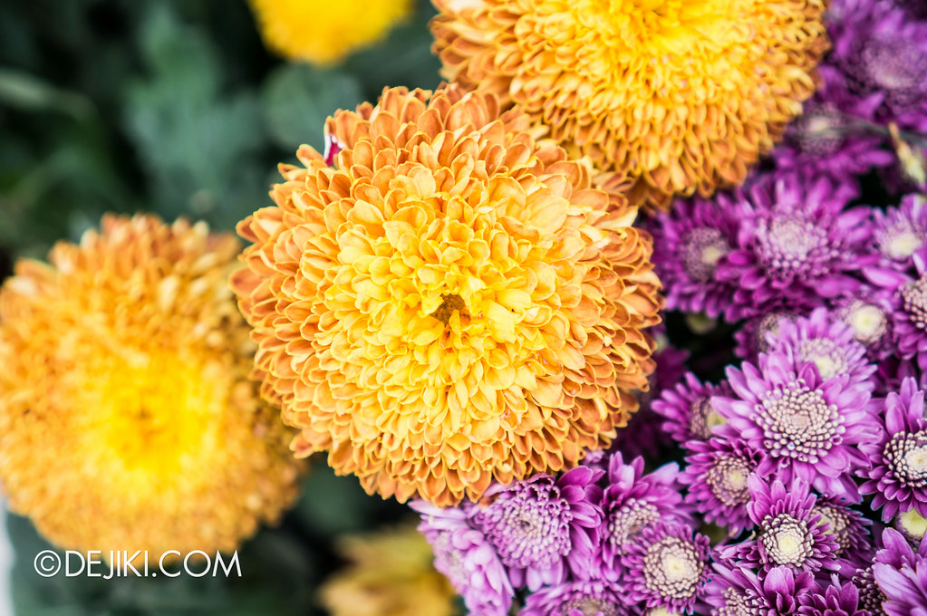 Gardens by the Bay - Chrysanthemum Glow