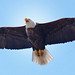Soaring To The Nest by Vidterry