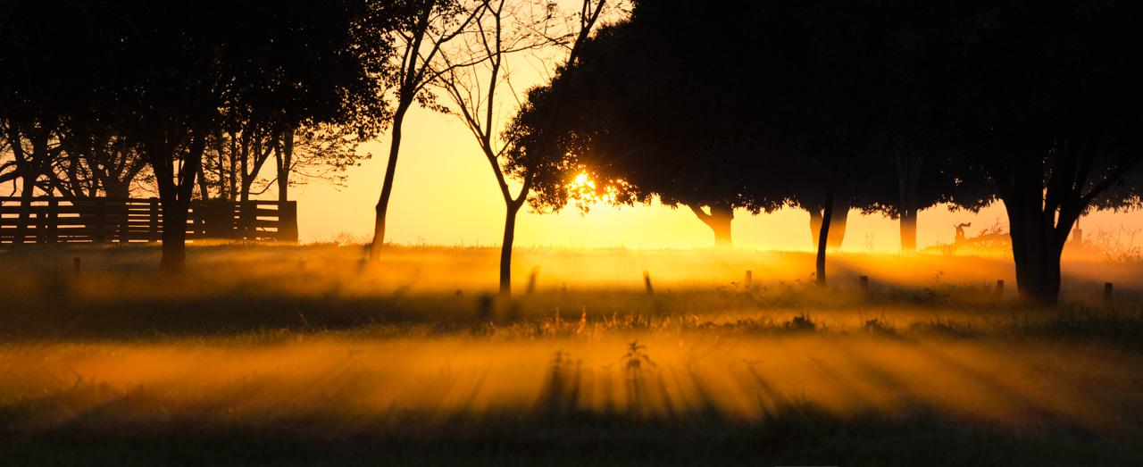 Amanece en nuestro camino hacia la Reserva Morombí, los fuertes rayos del sol arrasan con la neblina restante de la fría noche anterior. (Elton Núñez)