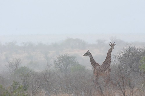 Tsavo East National Park - Kenya
