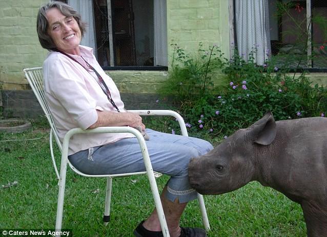 rinoceronte2-diarioecologia
